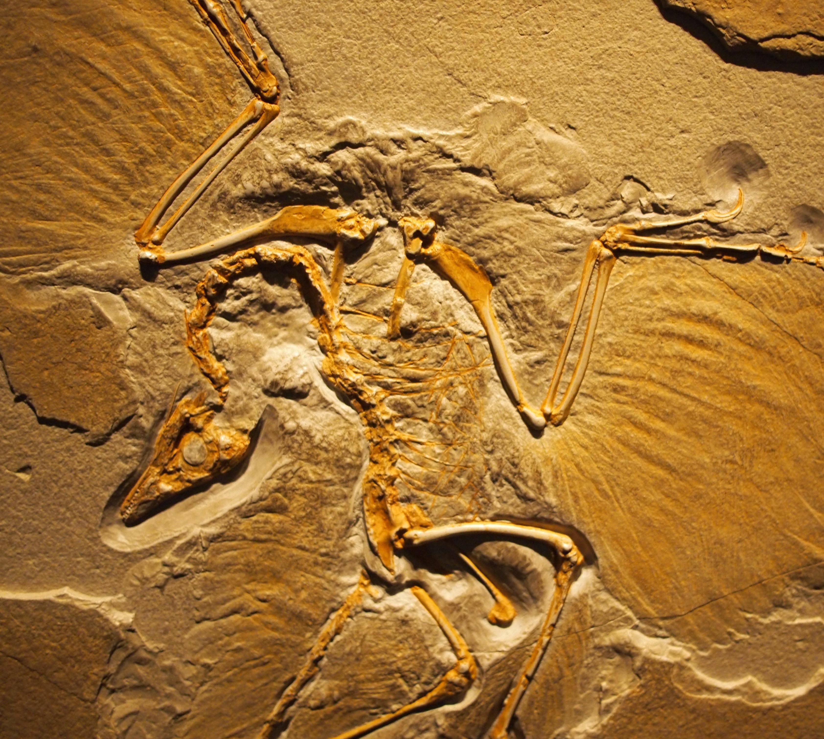 Китай, динозавтр, история, археология, Выявлена ещё одна связь между динозаврами и современными птицами
