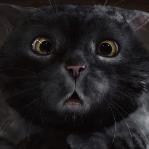Великобритания, история, реклама, кино, кинематограф, рецензия, поп-культура, Sainsbury's Cat Mog: кот, испортивший Рождество стал любимцем пользователей сети