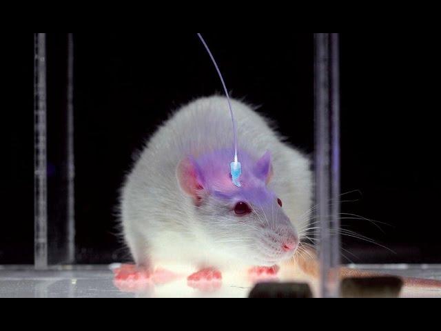 ген,панчин,наука,генетика,инженерия,физика,радость,люди, Лечение генами: как незрячего сделать зрячим?